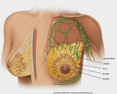 breast tumor , carotenoid , fruits , salubrious pectus , salubrious pectus tips , salubrious women , how to keep pectus , keep salubrious pectus , foreclose pectus tumor , sexy pectus , vegetables ,