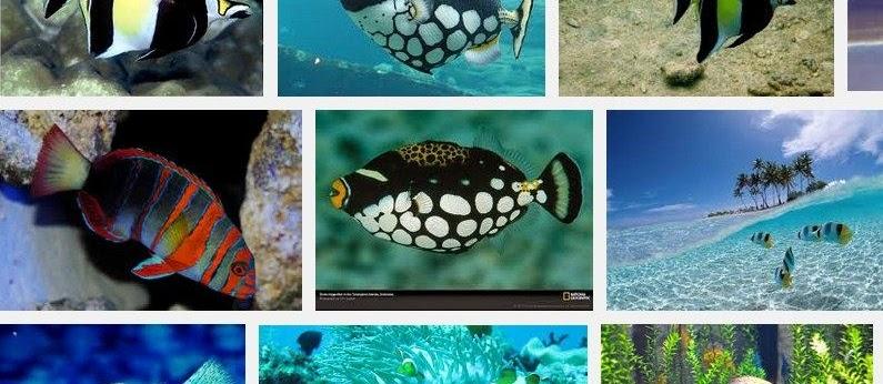 GAMBAR Jenis-Jenis Ikan Terlengkap? Lihat Detailnya Disini