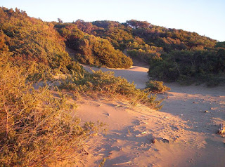 Sand dunes in the beautiful Rimigliano nature park, which is next to the resort of San Vincenzo