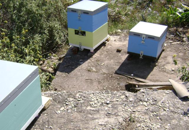 Πωλούνται λόγω υγείας μελίσσια και μελισσοκομικός εξοπλισμός στην Σαλαμίνα