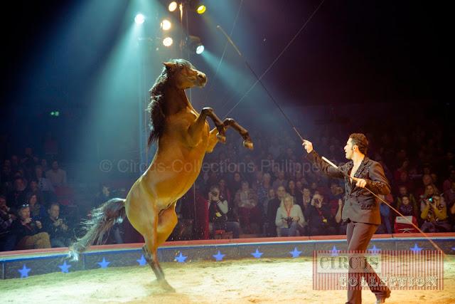 cheval brun sur les pattes arrières