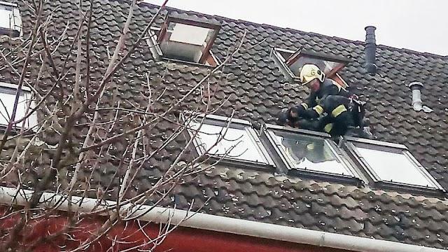 A tetőn akart levegőzni egy tacskó Győrben