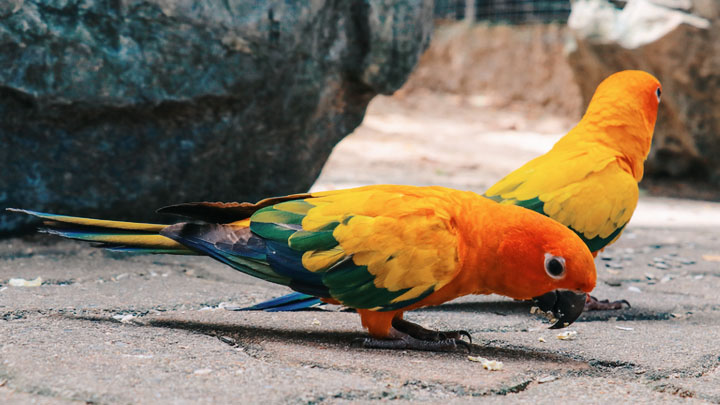 parrot behavior guide