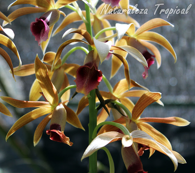 Consejos para cuidar la salud de tus orquídeas
