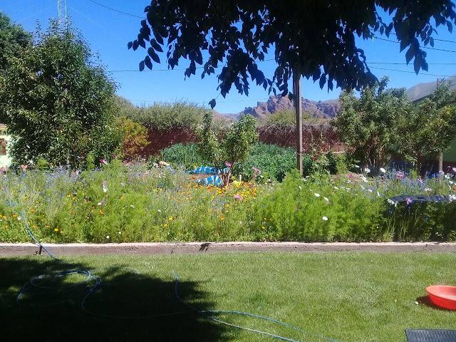 Im Pfarrgarten blüht und wächst es das ist eine Pracht und der Rasen ist grüner als in London.