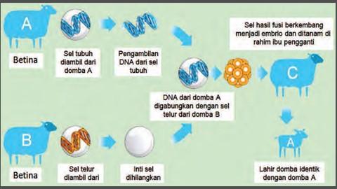 proses kloning hewan transgenik