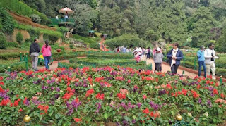 4- Ooty to host 2nd flower festival during North East Monsoon