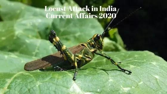 Locust Attack in India: Current Affairs 2020