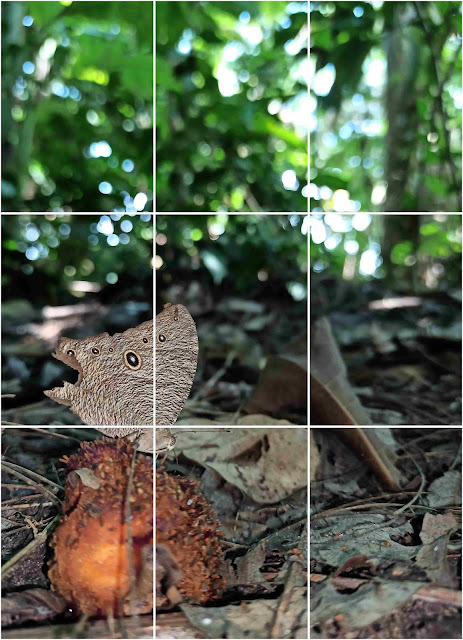 Photography-composition-rules_rule-of-thirds
