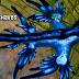 Dragones azules, una extraña especie que aparece en las costas de Texas