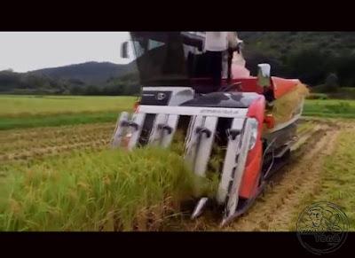Panen Padi Modern Petani Taiwan