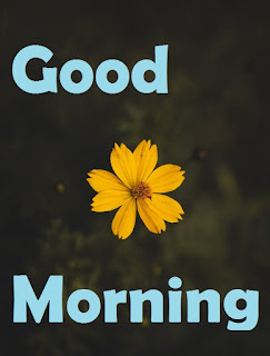 good morning images of flower