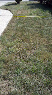 Lawn Section 1a after application of Nature's Avenger.