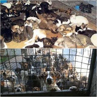 refugio-gato-perro-abandono-saturado