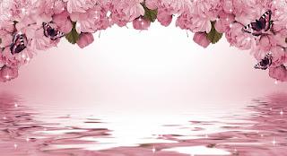 Gambar background bunga mawar merah