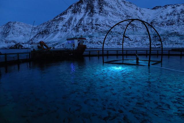 Signify ajuda a otimizar o crescimento do peixe e a reduzir o tratamento do piolho do mar até 50%