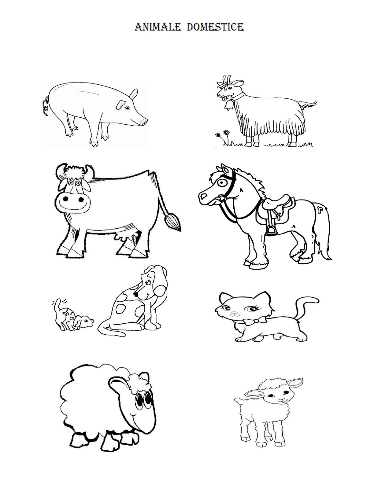 Educatia Conteaza Animale Domestice