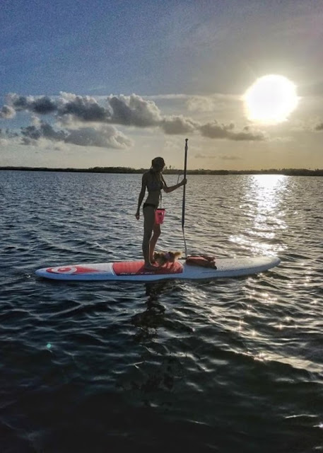 sunset, photography, go pro, bikinis, manatees, dogs, paddle boarding, tour, new smyrna beach, florida