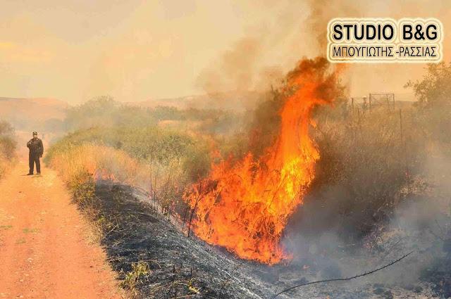 Φωτιά στη Ν. Τίρυνθα Αργολίδας