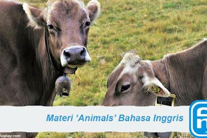 Materi Animals Di Dalam Bahasa Inggris Lengkap Dengan Contohnya