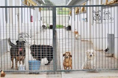 Σε δημόσια ηλεκτρονική διαβούλευση ο Κανονισμός λειτουργίας διαδημοτικού καταφυγίου περίθαλψης αδέσποτων ζώων Δήμων Ηγουμενίτσας - Σουλίου - Φιλιατών