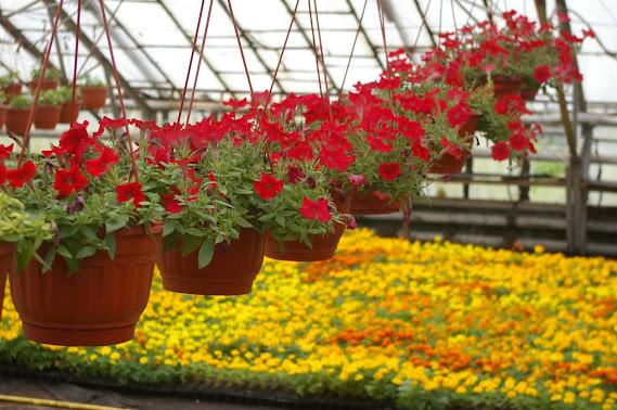 Уникальная система скидок от тепличного хозяйства «Цветочная Долина» в агрофирме «Подмосвковное»