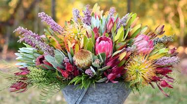 Proteáceas: las flores del fynbos utilizadas en algunos arreglos florales