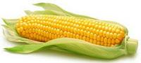 Beberapa macam penyakit yang dapat diobati oleh tanaman jagung: