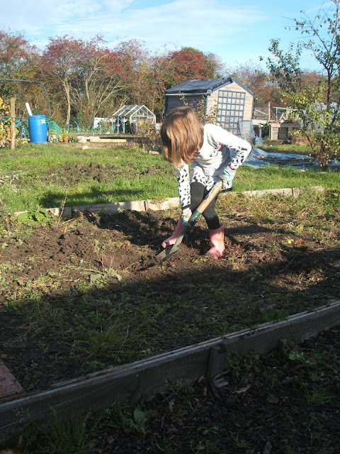 young child digging in the soil at the allotment