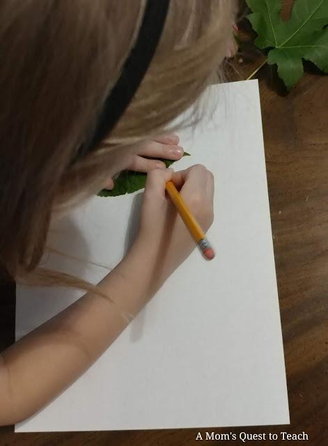 tracing leaf
