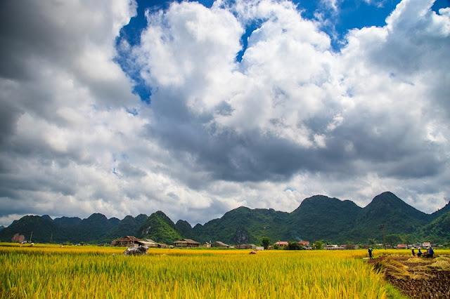 Bac Son Valley - The Heart of Northern Vietnam's Agriculture 2