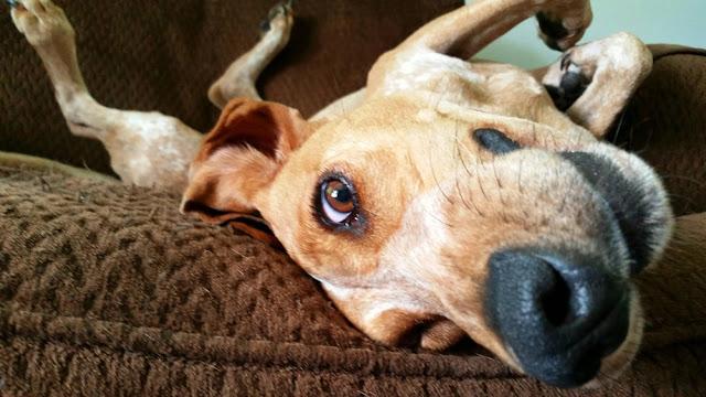 Funny-dog-photos-upside-down-dog