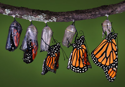 Nature lessons about patience from butterfly birth process