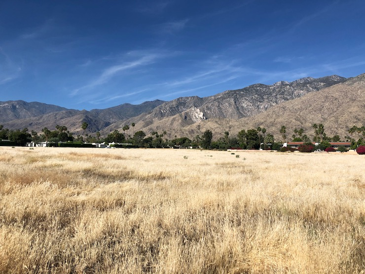 Palm Springs May dry grass