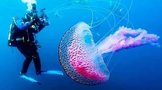 Прозрачные животные, представители морских глубин