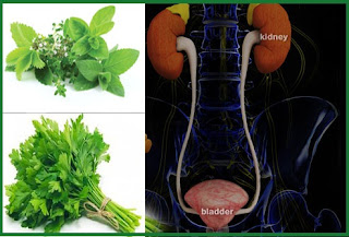 علاج التهاب المسالك البولية جابر القحطاني