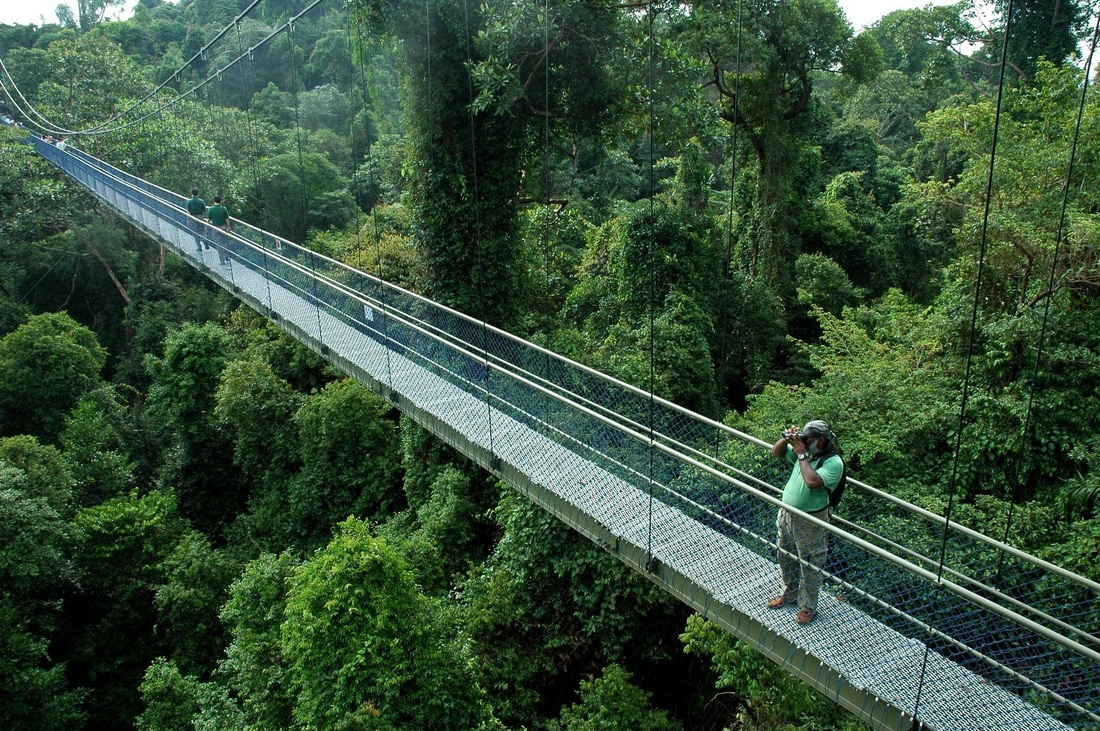MacRitchie Reservoir treetop Walk, an aerial walkway that grants you a bird's eye view of the rainforest's canopy.
