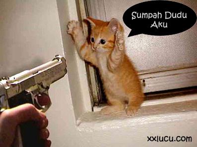 foto meme kucing angakt tangan lucu
