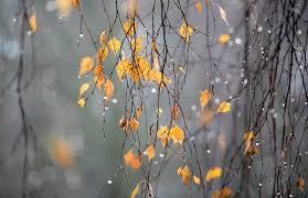 Как осень многогранна