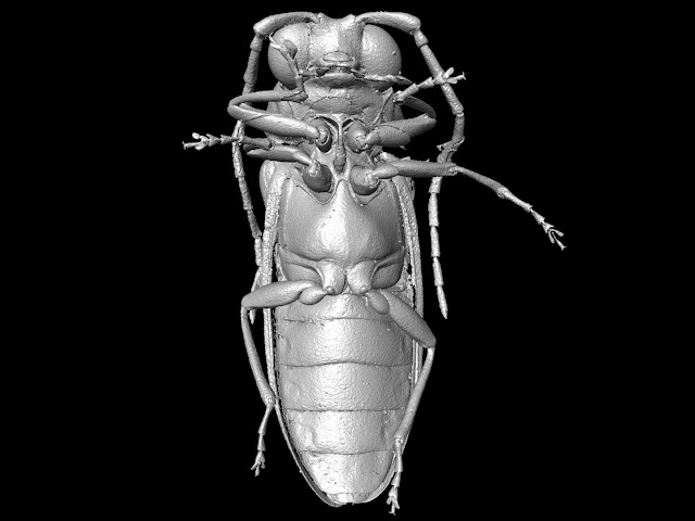 Scientists reconstruct beetles from the Cretaceous