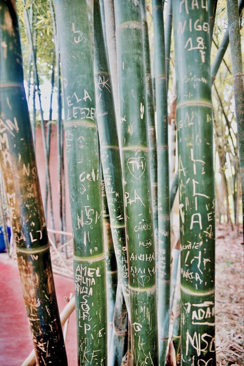 marrakesz ogród majorelle, Marrakesz ogród ysl Laurent Jardin majorelle rośliny