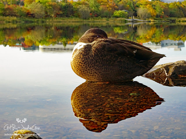 Beautiful Duck Photo