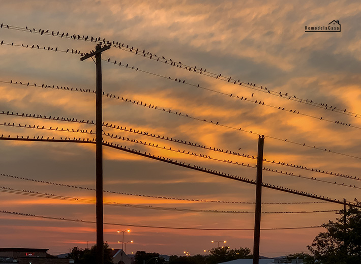 Sunset in Maryland with a flock of birds sitting on power lines
