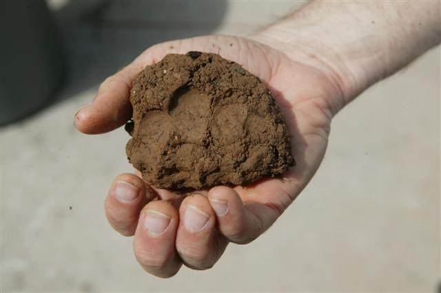 FORESTRY - LEARNING: CLAY IS A SUBSTANCE PRESENT IN MOST ...
