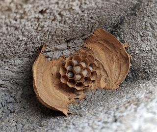 A hornet nest inside a cinder block