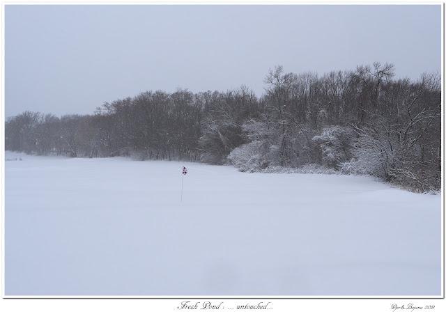 Fresh Pond: ... untouched...