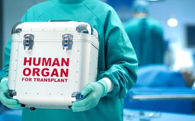 Caixões e órgãos humanos