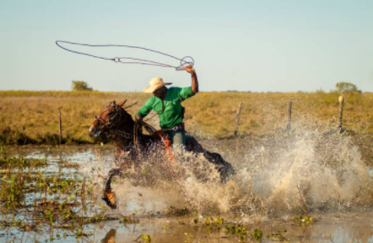 cowboy-horse-pantanal-vetarq