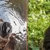 Η αγκαλιά γορίλα σε άνθρωπο και η αρκούδα στο νερό: Φωτογραφίες που κέρδισαν σε διαγωνισμό
