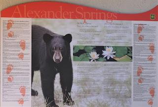 Vorsichtig Bären! in Alexander Springs, Florida USA